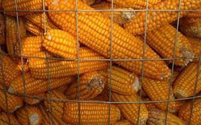 圈玉米铁丝网